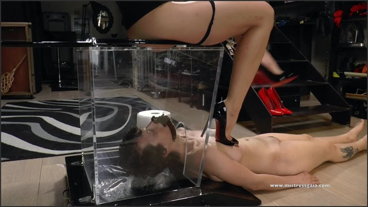 Scat Porn – Request #2332
